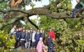 Third Form Walk - A glimpse of sunshine beneath a fallen oak... And no, Mr Cooley didnt break it!